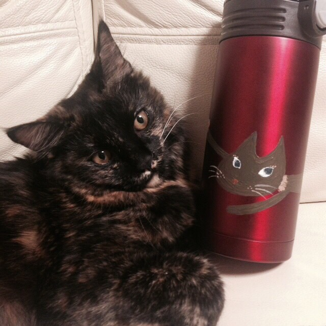 子猫のアンコさんとマグボトル